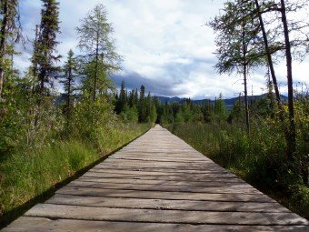 One section of the boardwalk leading to Liard Hot Springs.