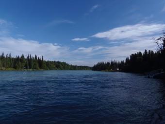 The Kenai River is minus four Sockeye Salmon now.