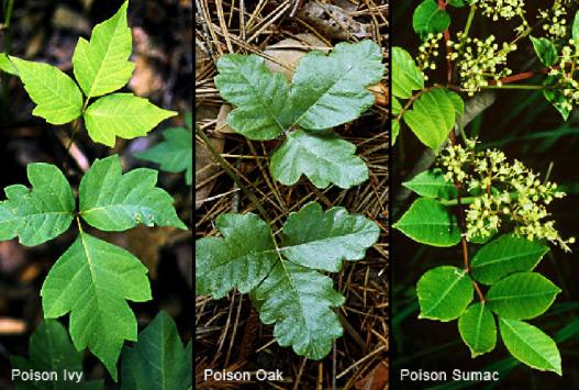 Poison-Plants